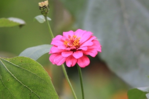 Pink Flower Picture