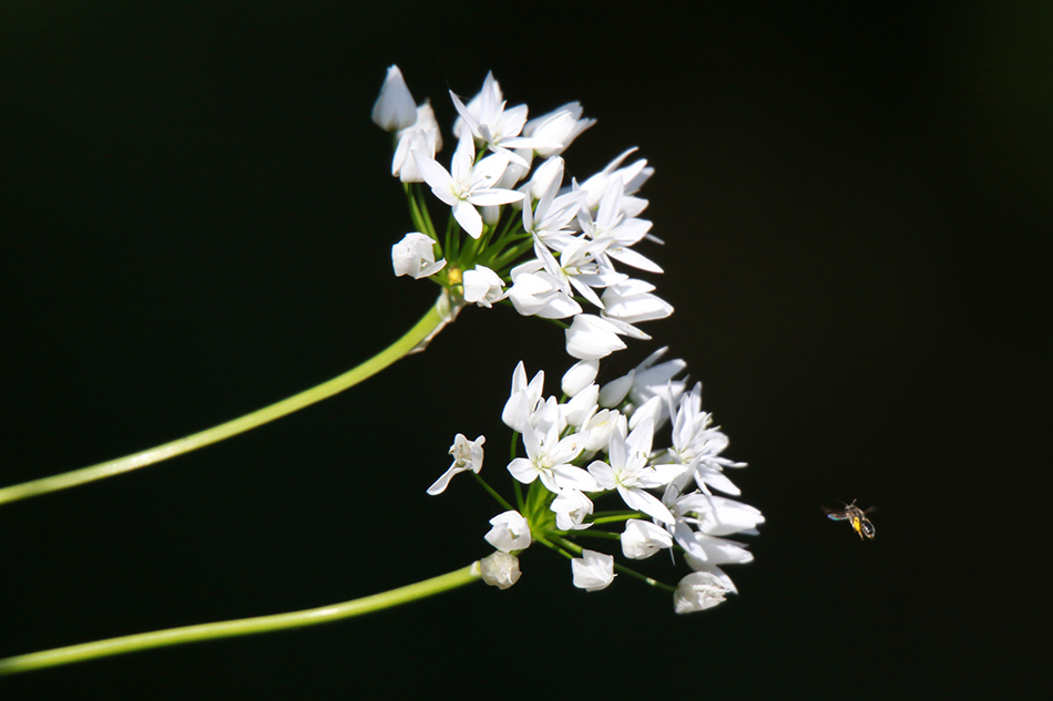 A picture of white flowers